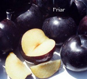 Friar Plum